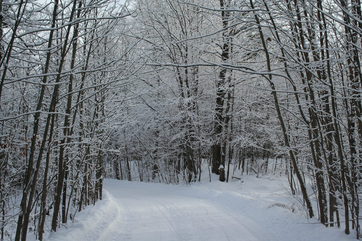 driveway in winter - IMG_2892.jpeg
