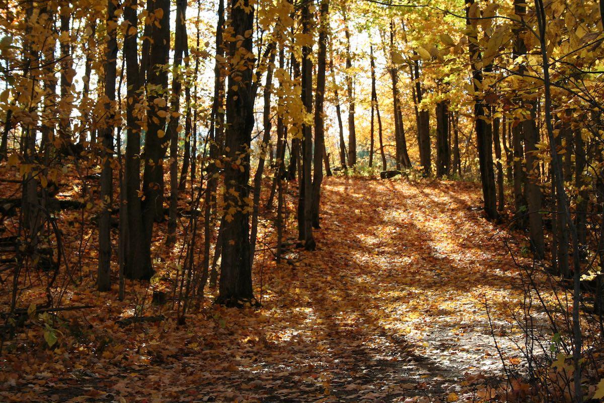 Part of Trail - IMG_2010.jpeg