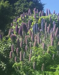 Del Monte GC Flora.JPG