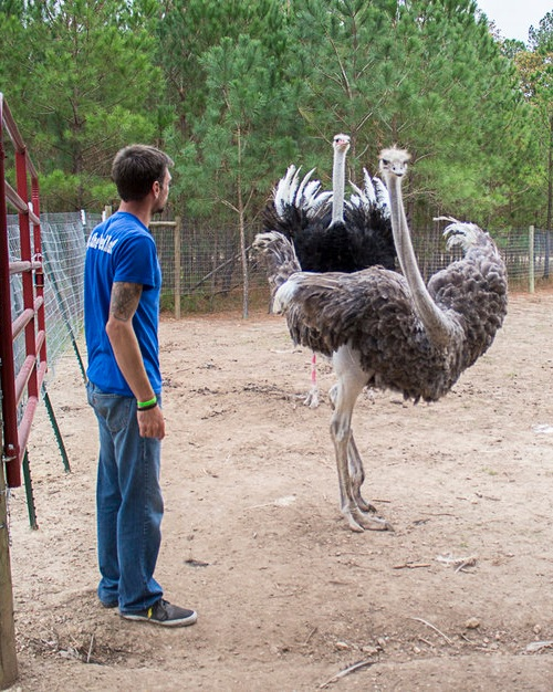 Ostrich hands-on farm tour