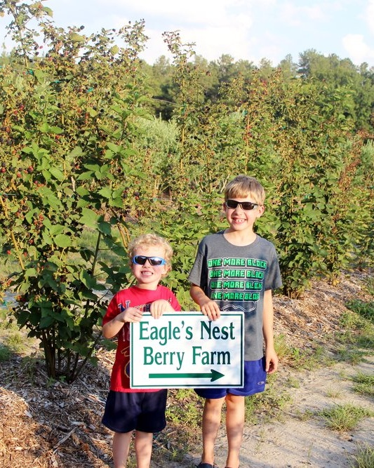 Berry picking and outdoor education