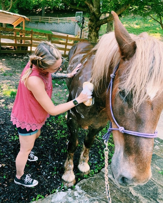 Spend a morning at the horse barn