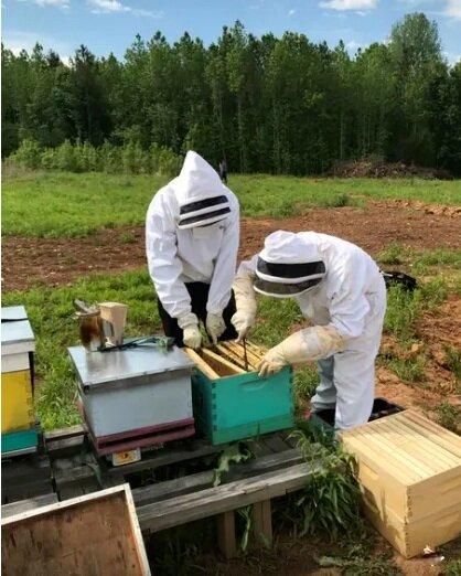 Hands on beekeeping experience