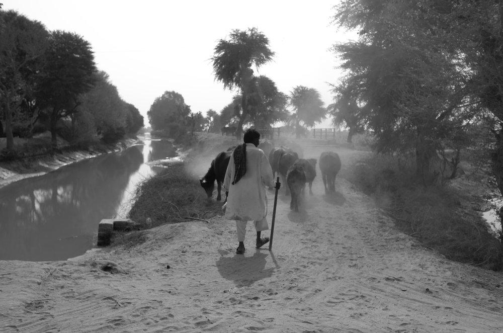 © Ijlal Muzaffar