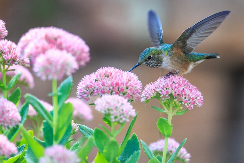 Vata energy is much like a hummingbird- always moving, always in action.