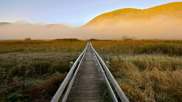 Marsh Boardwalk, Photo by David Jenne
