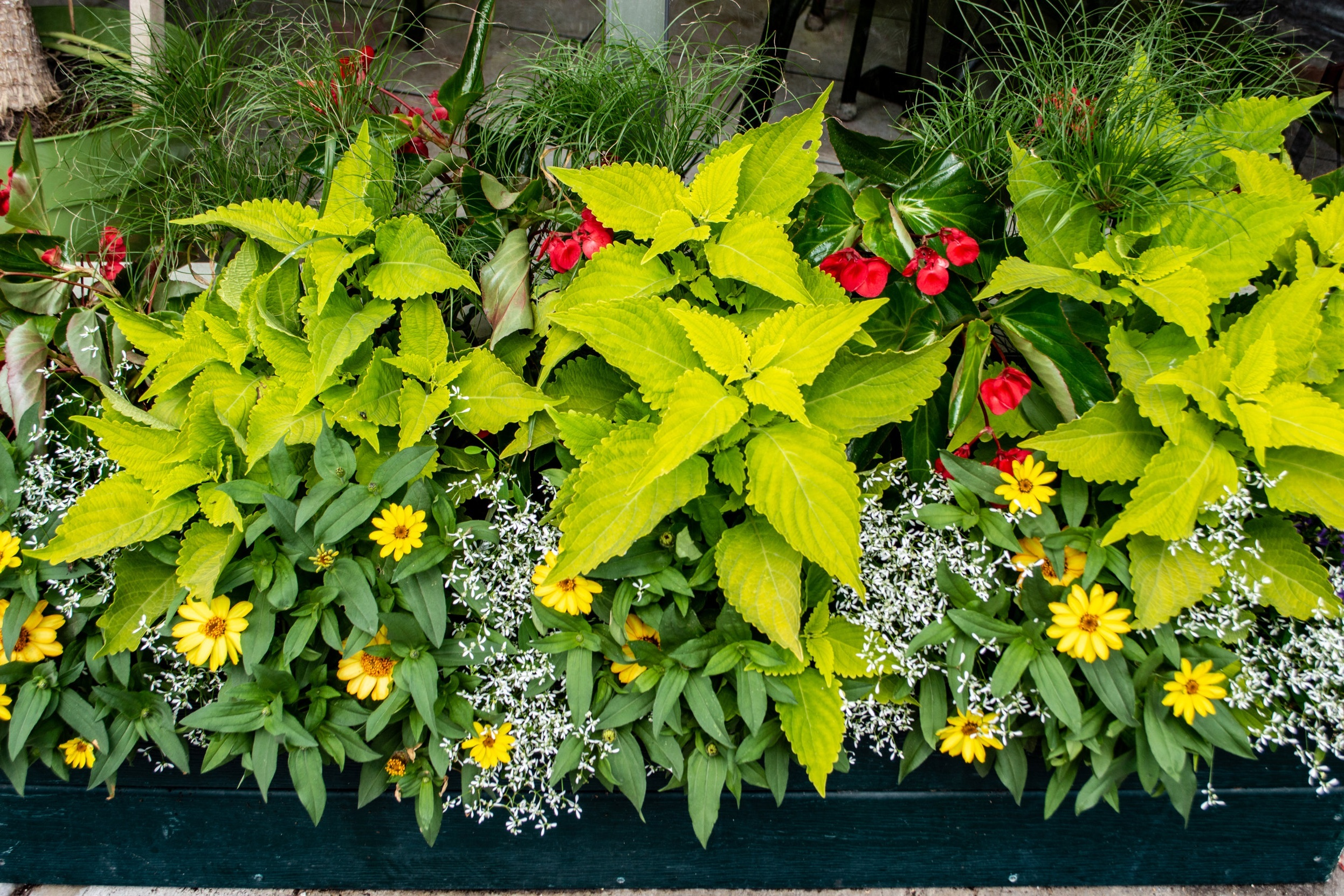 The Rutland Garden Club arranges plants in a box on Merchants Row in Downtown Rutland, Vermont.