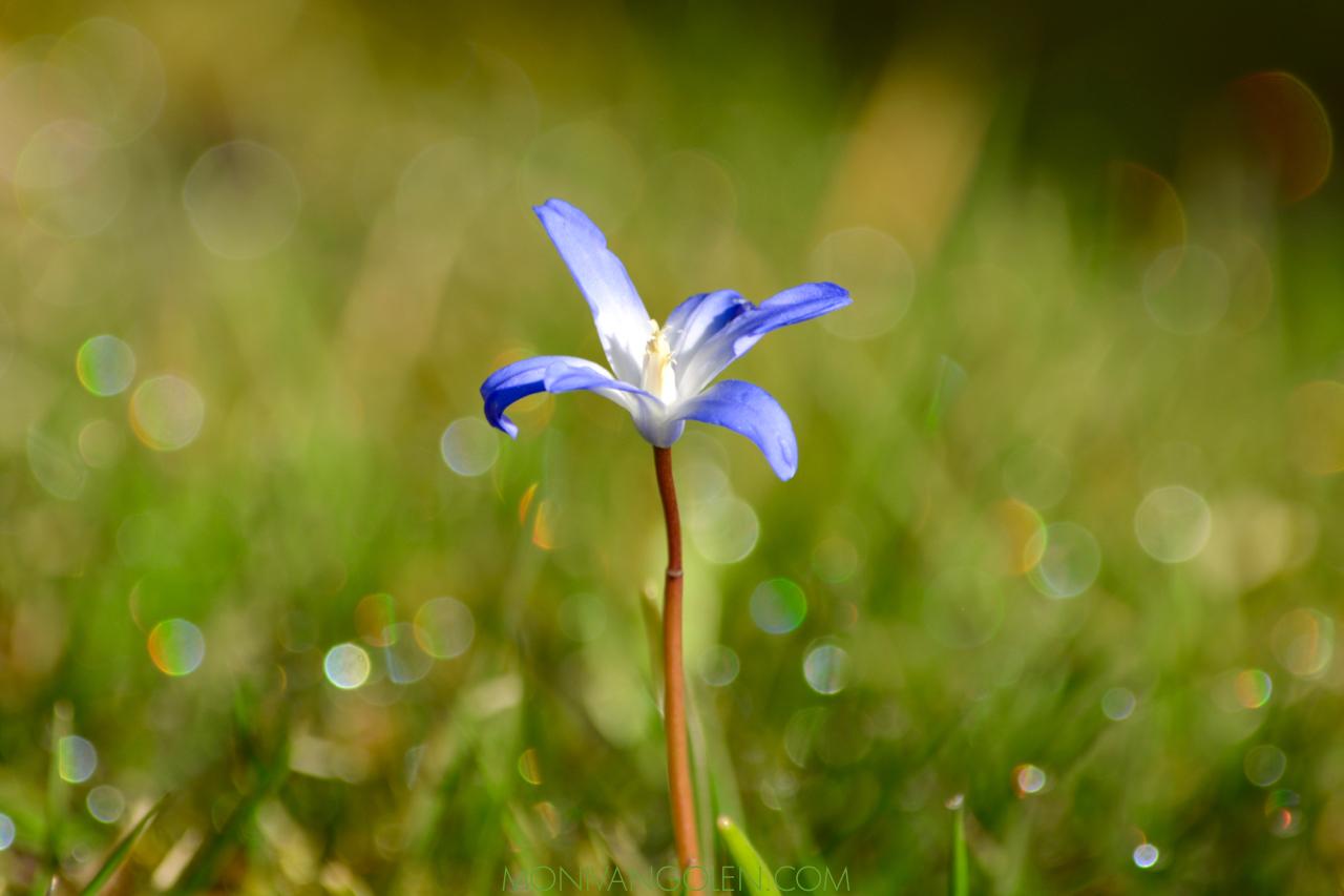spring2019.jpg