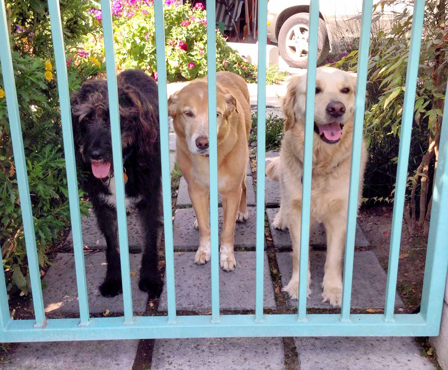Dash, Diamond and Woody