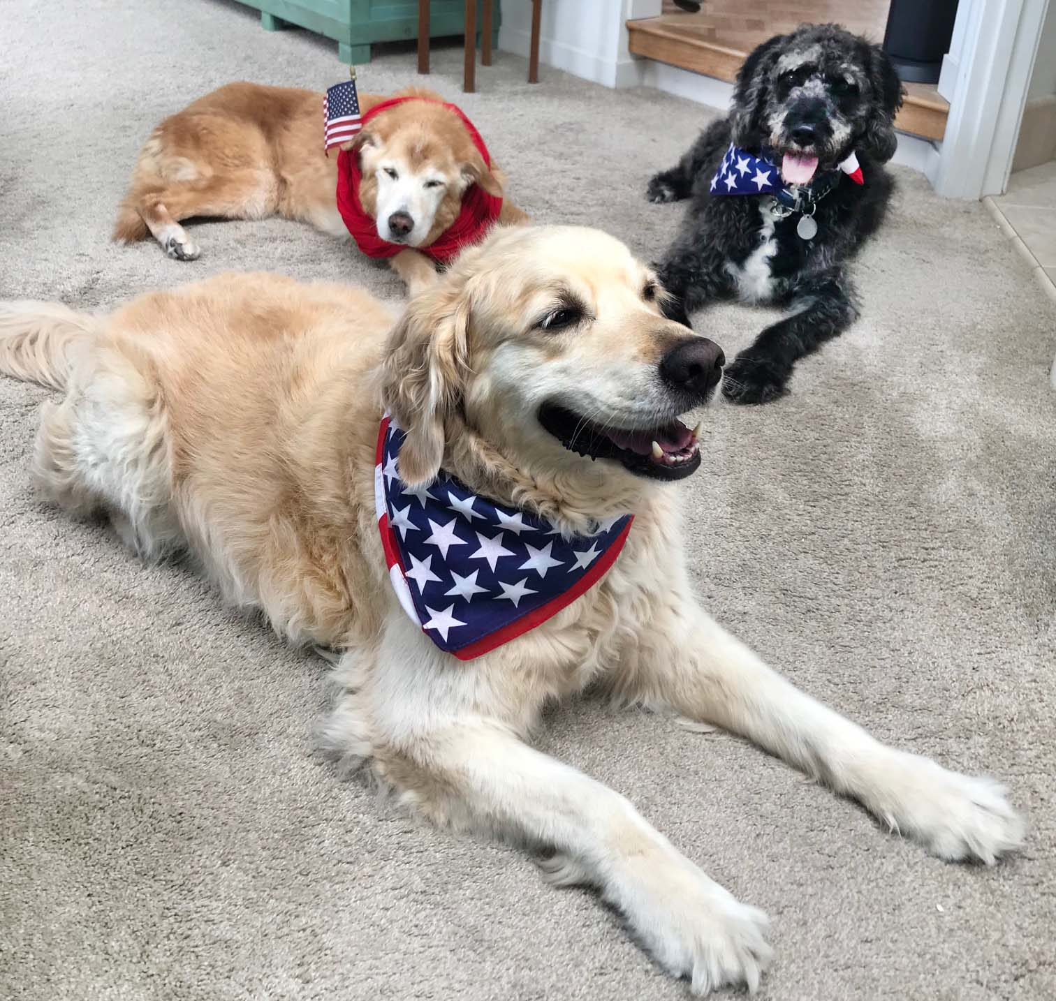 Diamond, Woody and Dash celebrating the 4th!