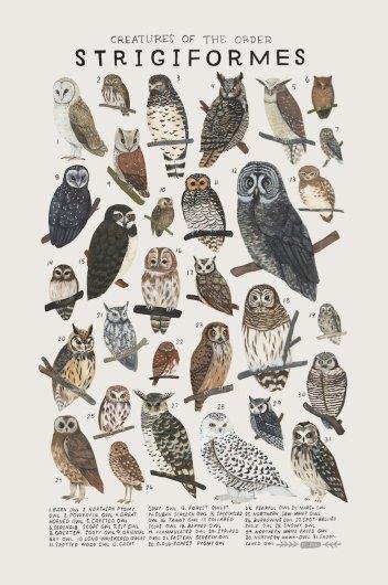kelsey-oseid-kelzuki-etsy-animal-art-print-2.jpg