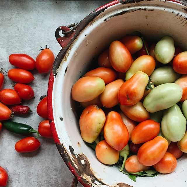 Our garden is still going strong! So, time to string up peppers to dry, and start whipping up more tomato sauces for cozy, winter meals. I feel very much like Laura Ingalls Wilder and I'm allllll about it.