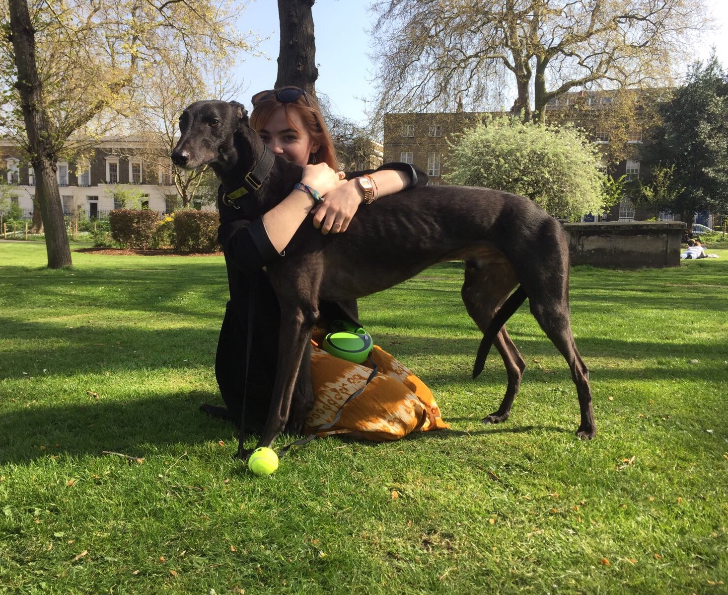 Myself & Parker, an ex racing, rescued Greyhound.    I started walking Parker when we were both new to London and it made me so happy to see him settle into his new life and come out of his shell.