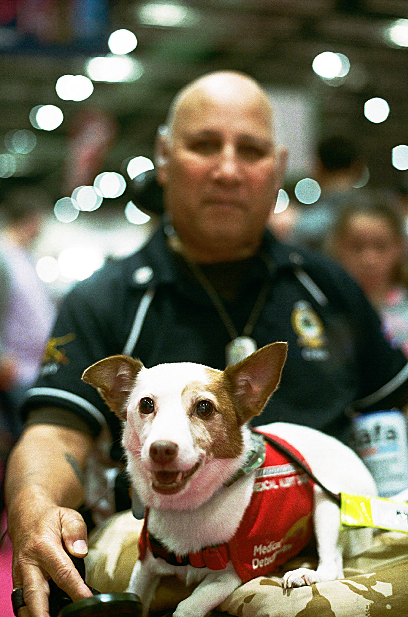 Medical Detection Dog  His job was to alert his owner before a painful seizure.giving him enough time to take his medication and prevent them all together, he can also drive the wheelchair.