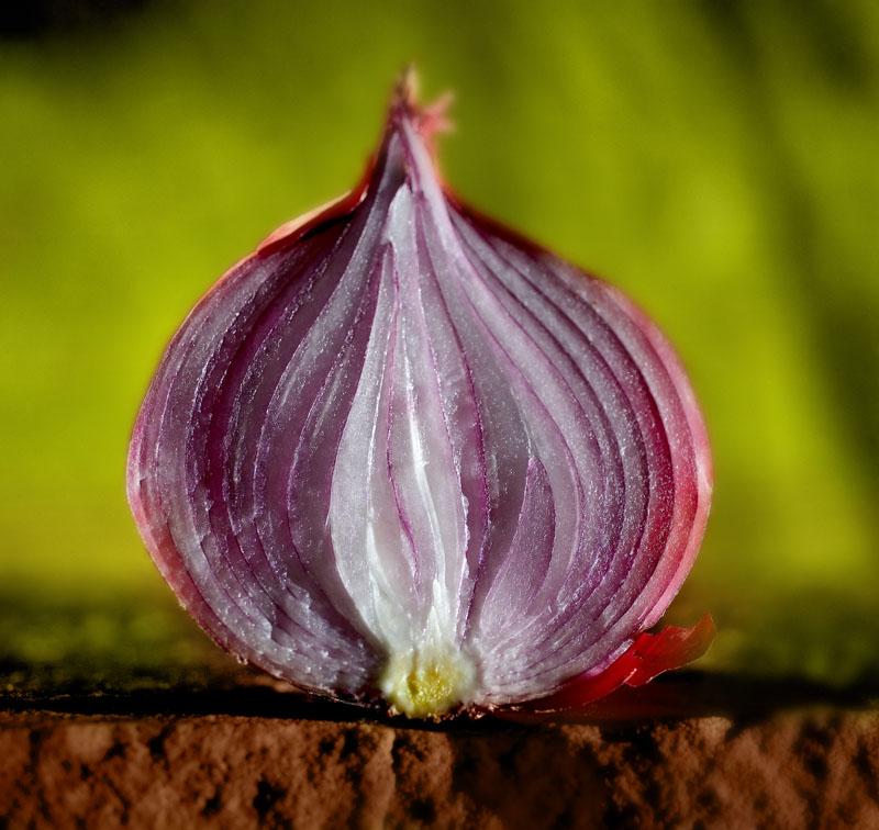 Onion1.5.jpg