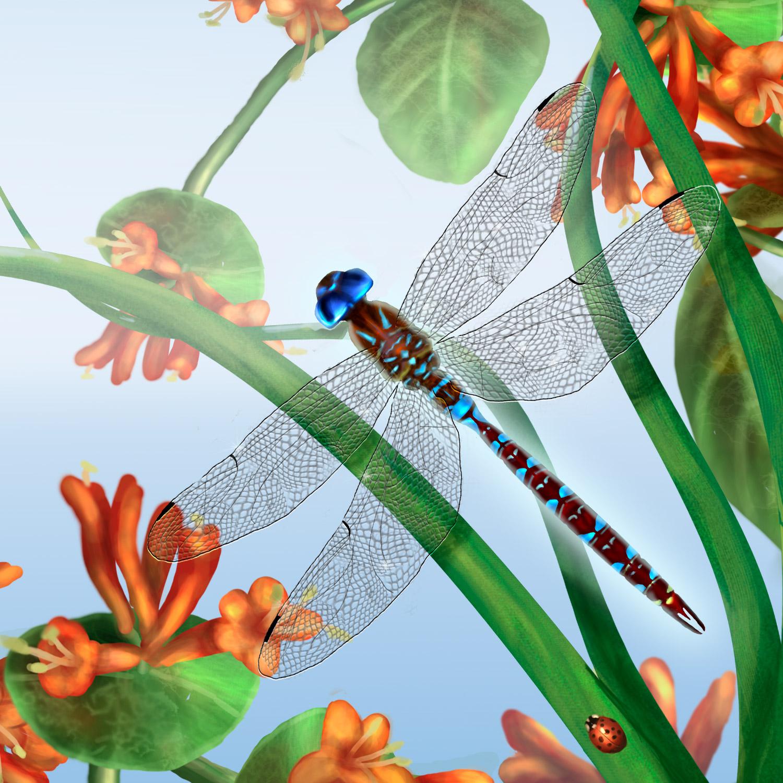 dragonfly-website-link.jpg