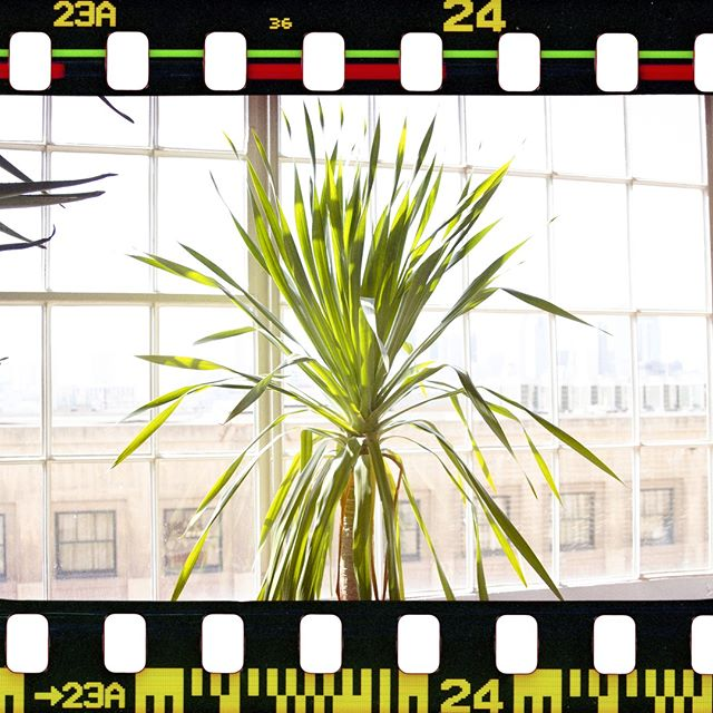 What is an office without plants? Don't ask us, we have a bunch! Every office needs plants. #plantlife