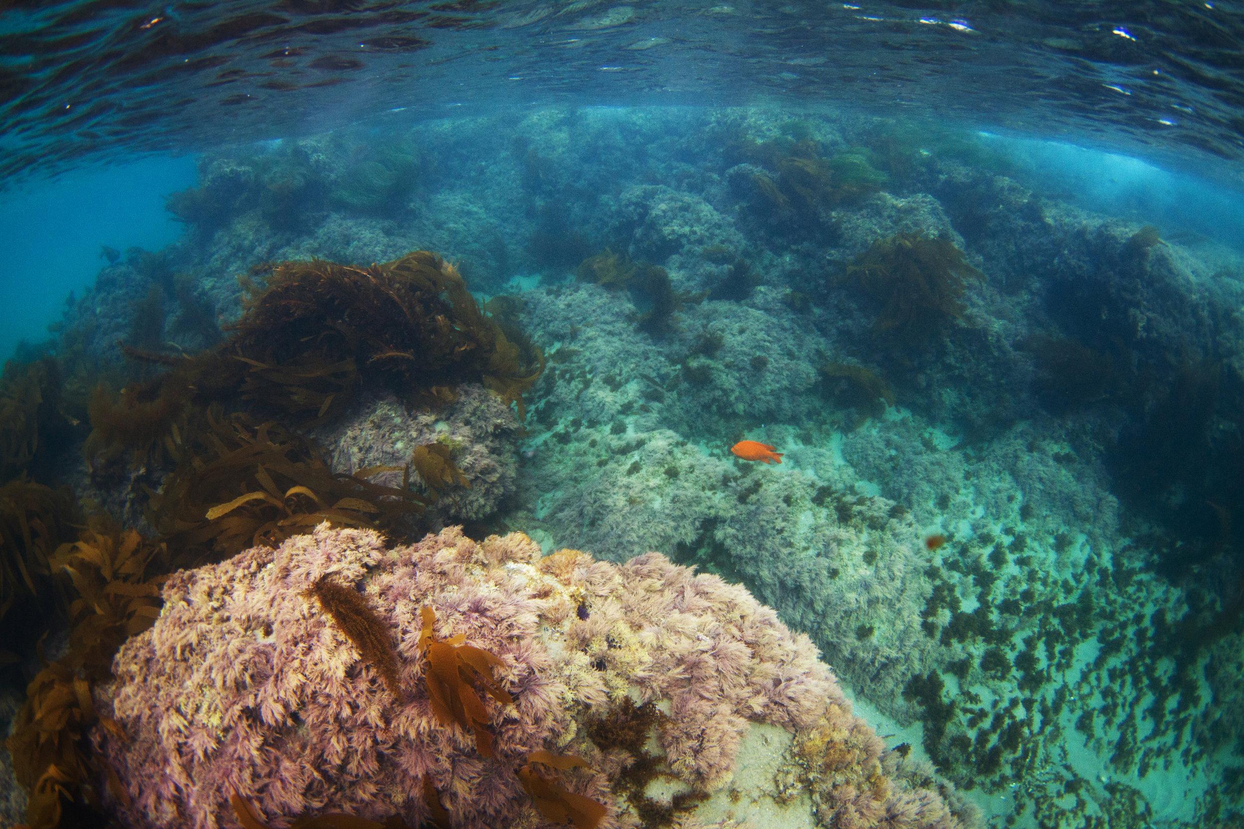 underwater_18.jpg