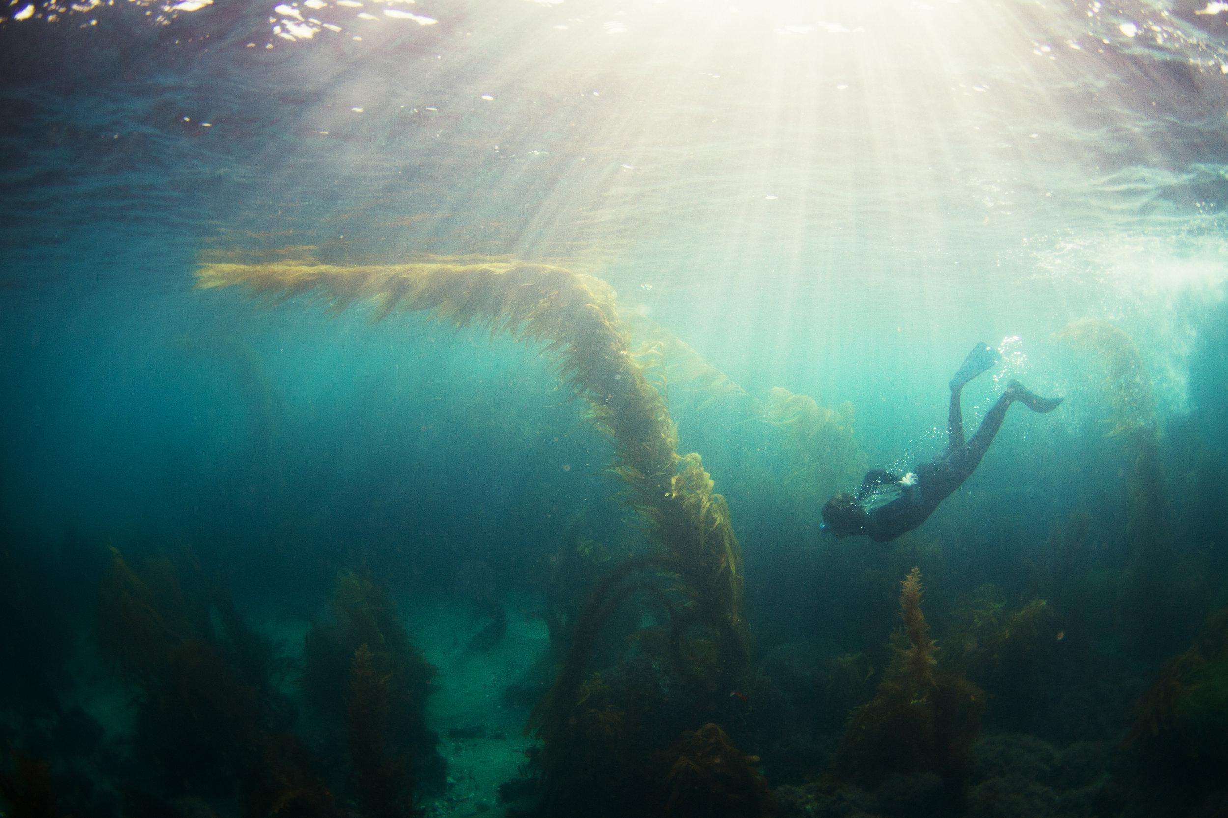 underwater_19.jpg