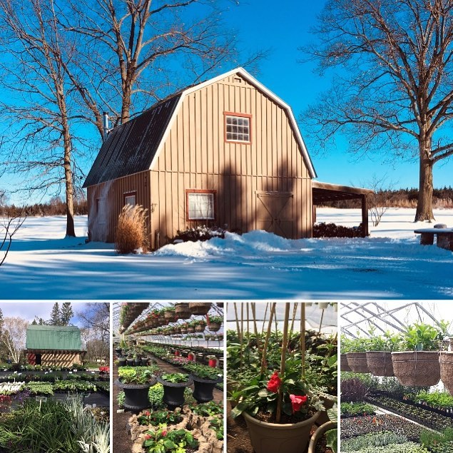 While the barn is still nestled in snow on the outside, we are busy on the inside with our preparations for SPRING !!🌸🌸🌺🌺 Here are a few photos from our previous season as we send warm , springlike thoughts out to everyone!! #bayofquinte #bayofquintetourism #gardencenter #flowers #containerplanting #2019garden #lovetogarden #springiscoming