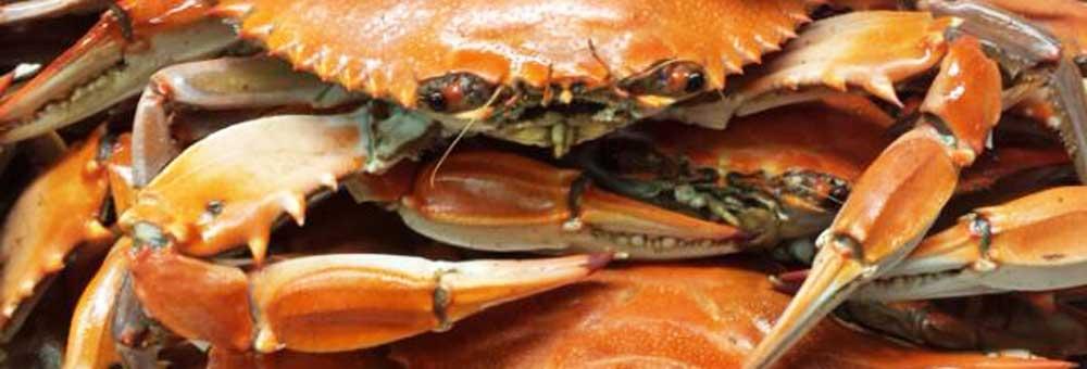 crab looking at you.jpg