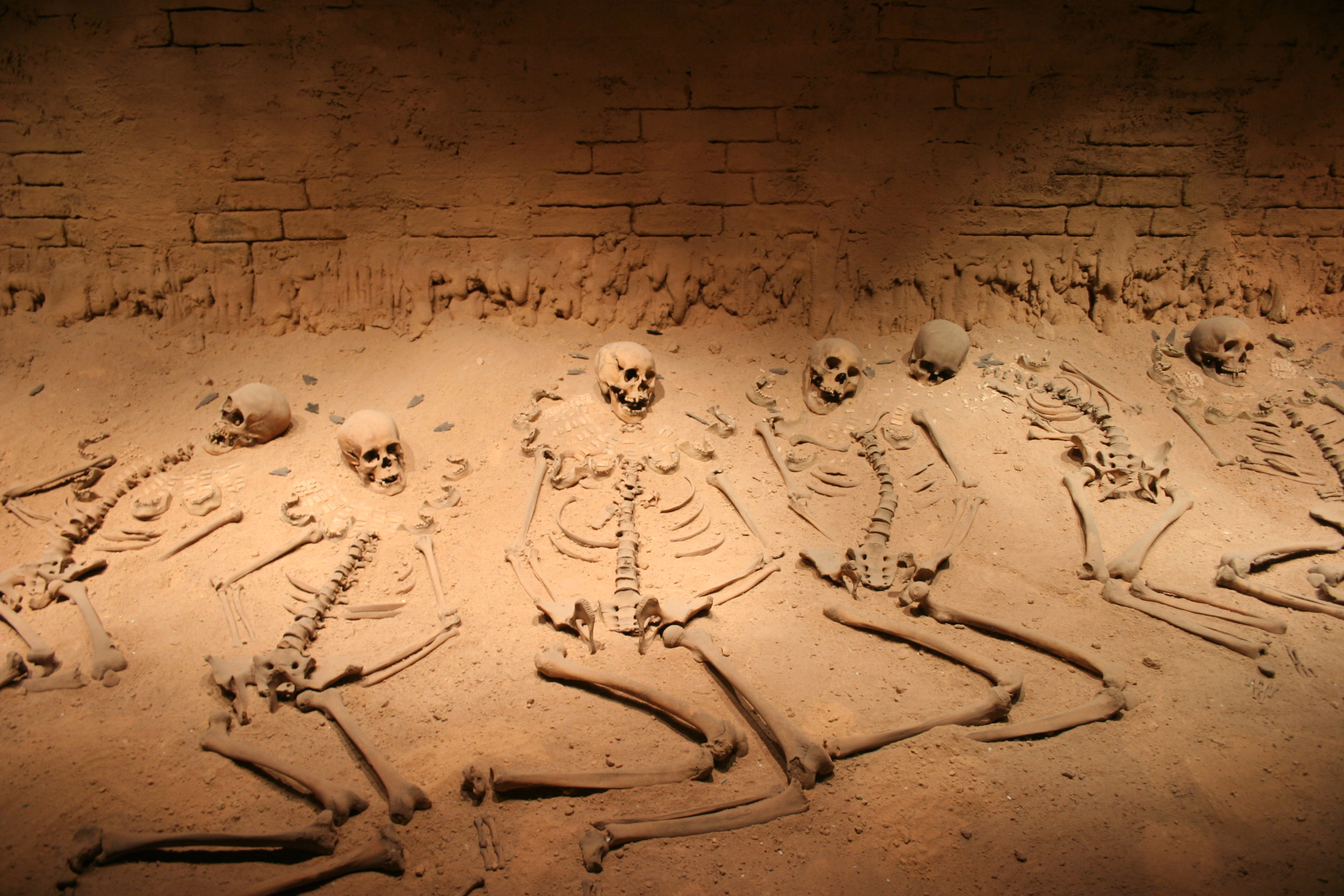 anthropologist and archaeologists -