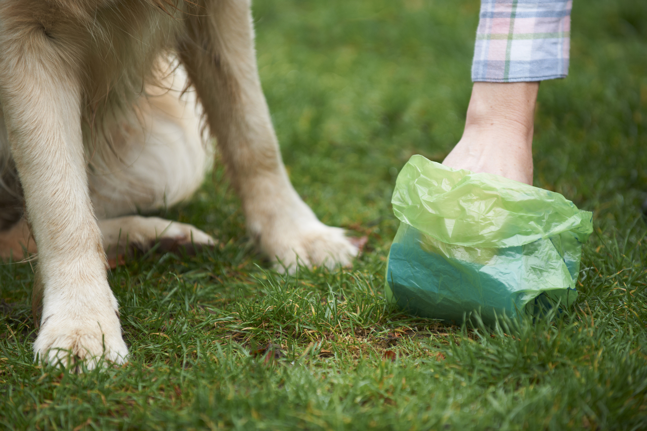 POOPY YARDGOT YOU DOWN? - Check out our Yard Clean-up services.
