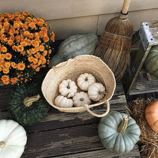 spent the day at my fav farms and roadside stands collecting pumpkins and decor for the season. so excited for the first day of fall tomorrow!! 🍂 i'm going to be spending the day decorating ✨ and releasing our first round of cozy fall clothes at 11am EST! tap the countdown in our stories to turn on a reminder so you don't miss it ⏰ see you guys tomorrow!