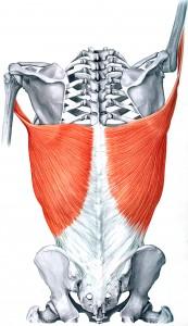 1-lat-anatomy.jpg