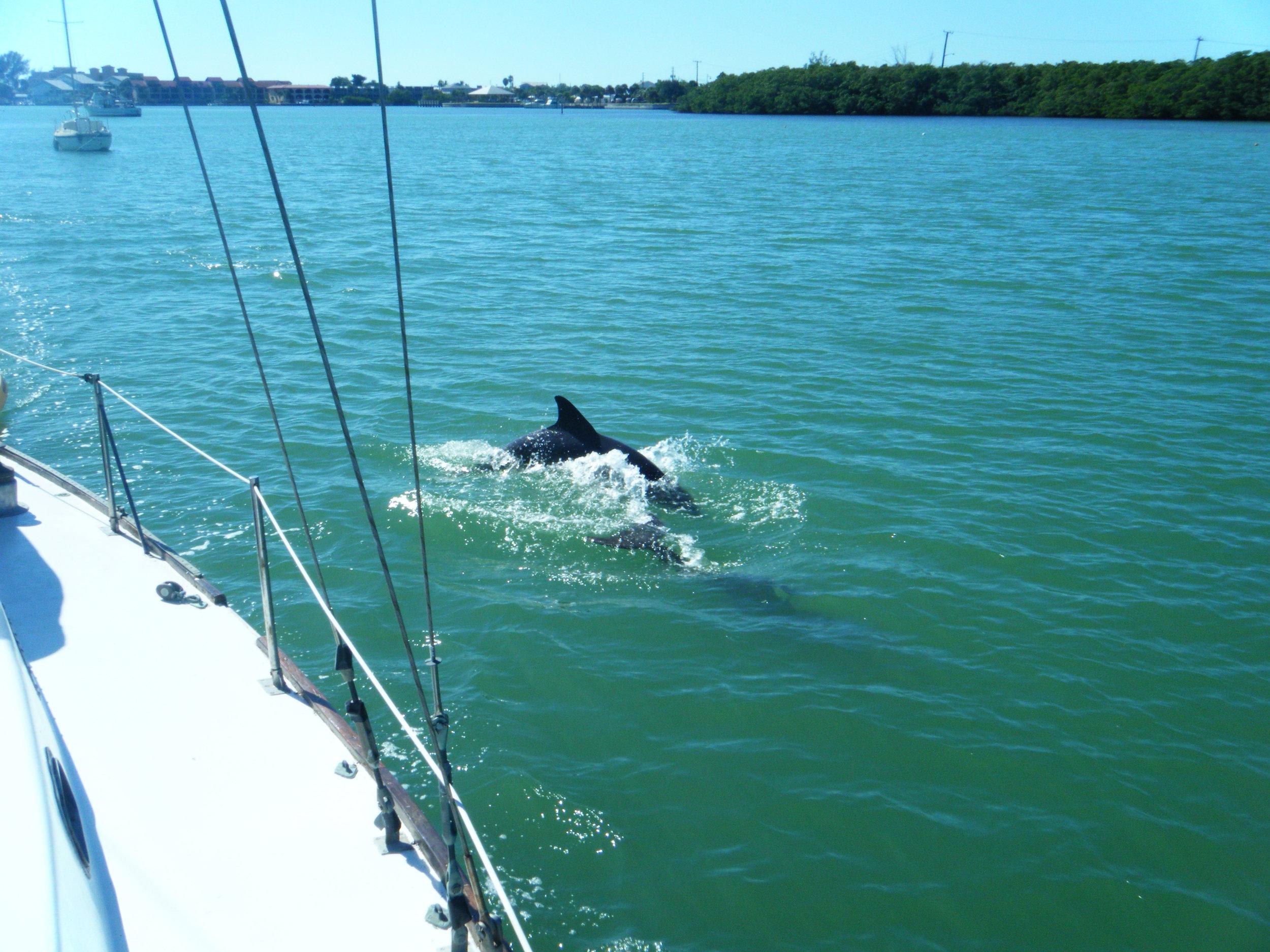 dolphins.jpg