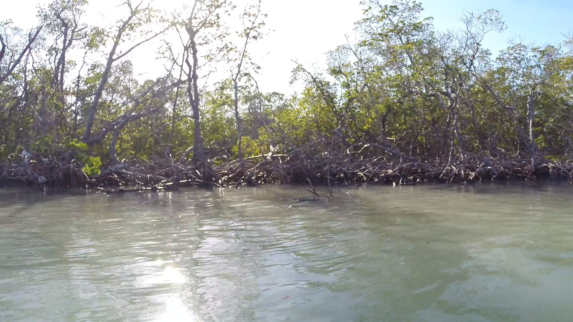 The mangroves that lined Sea Oat were filled with birds, if you could spot them.