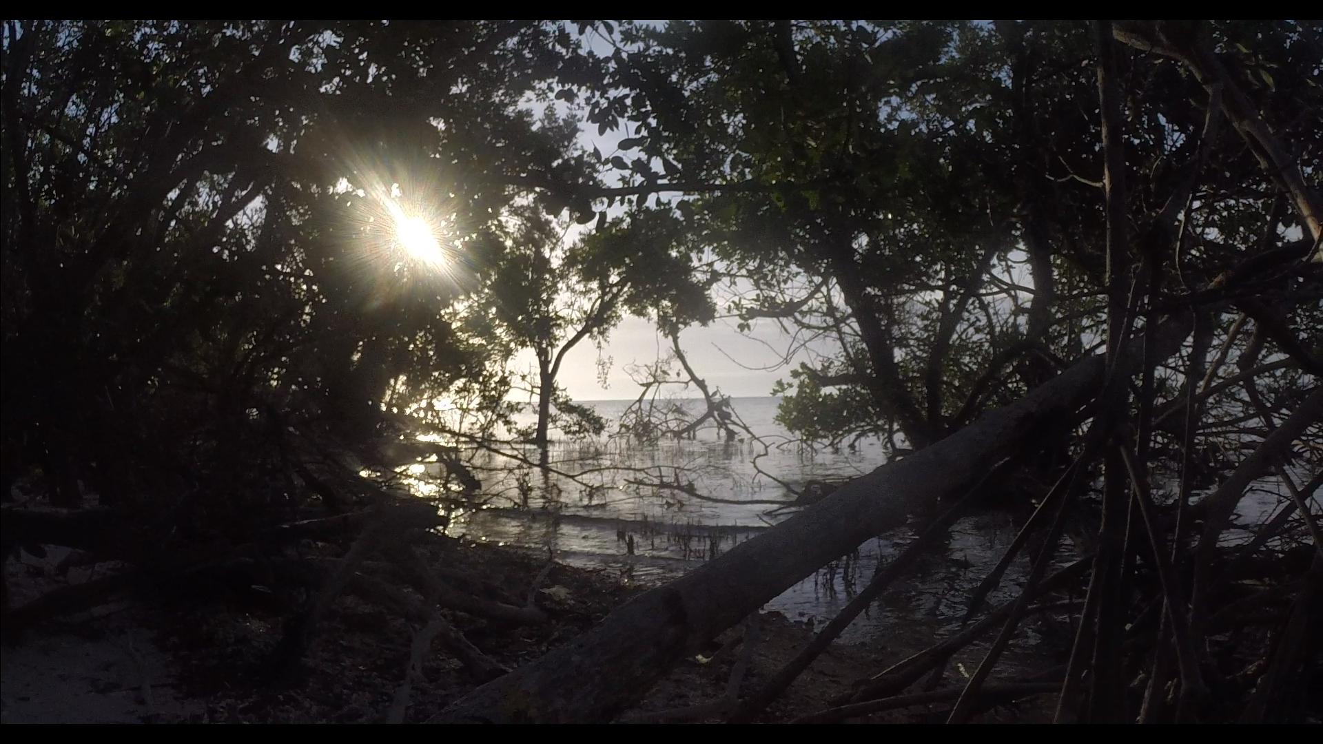 Hidden among the mangroves of Lumber Key.