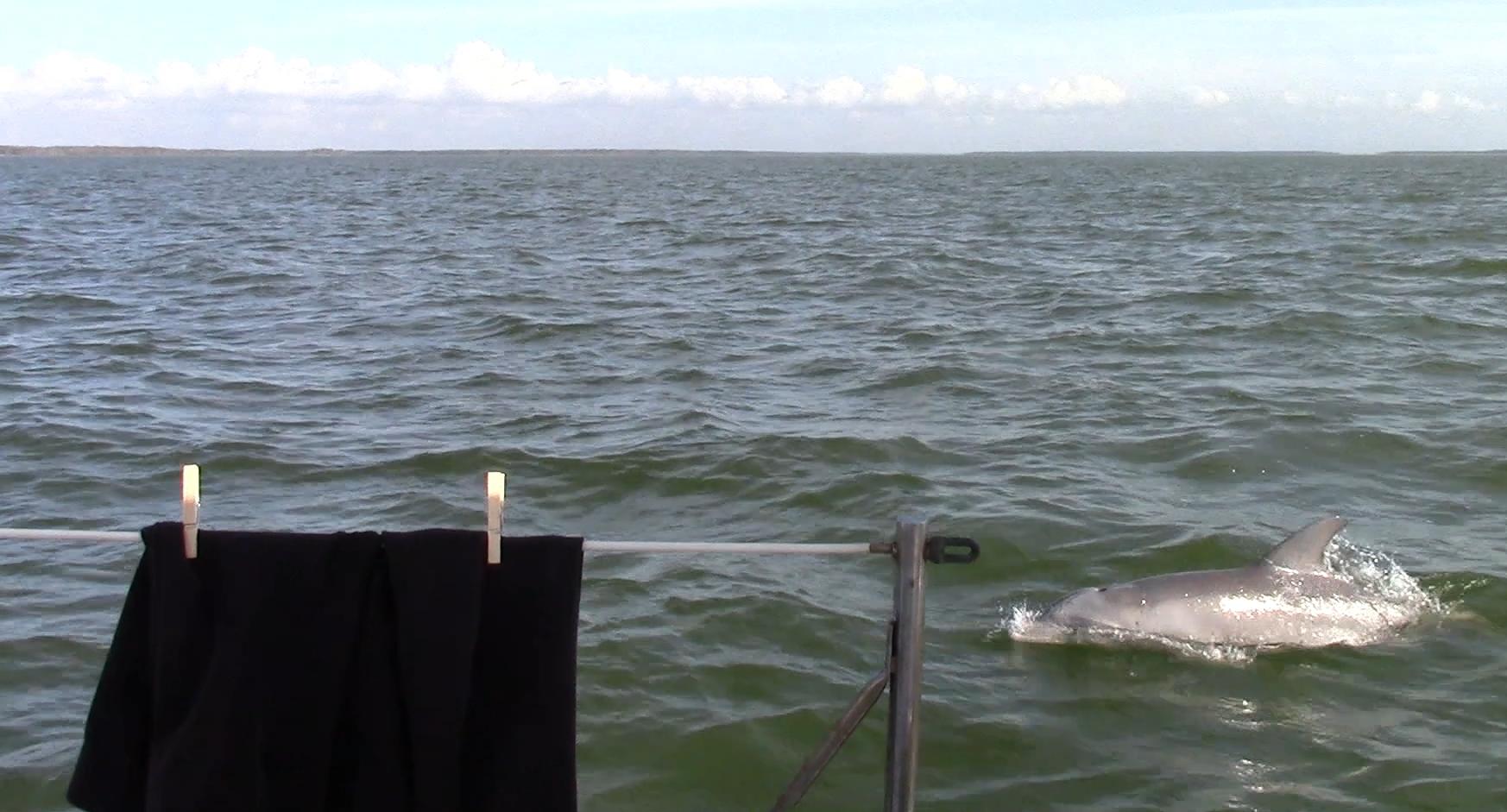 Always love seeing dolphins.