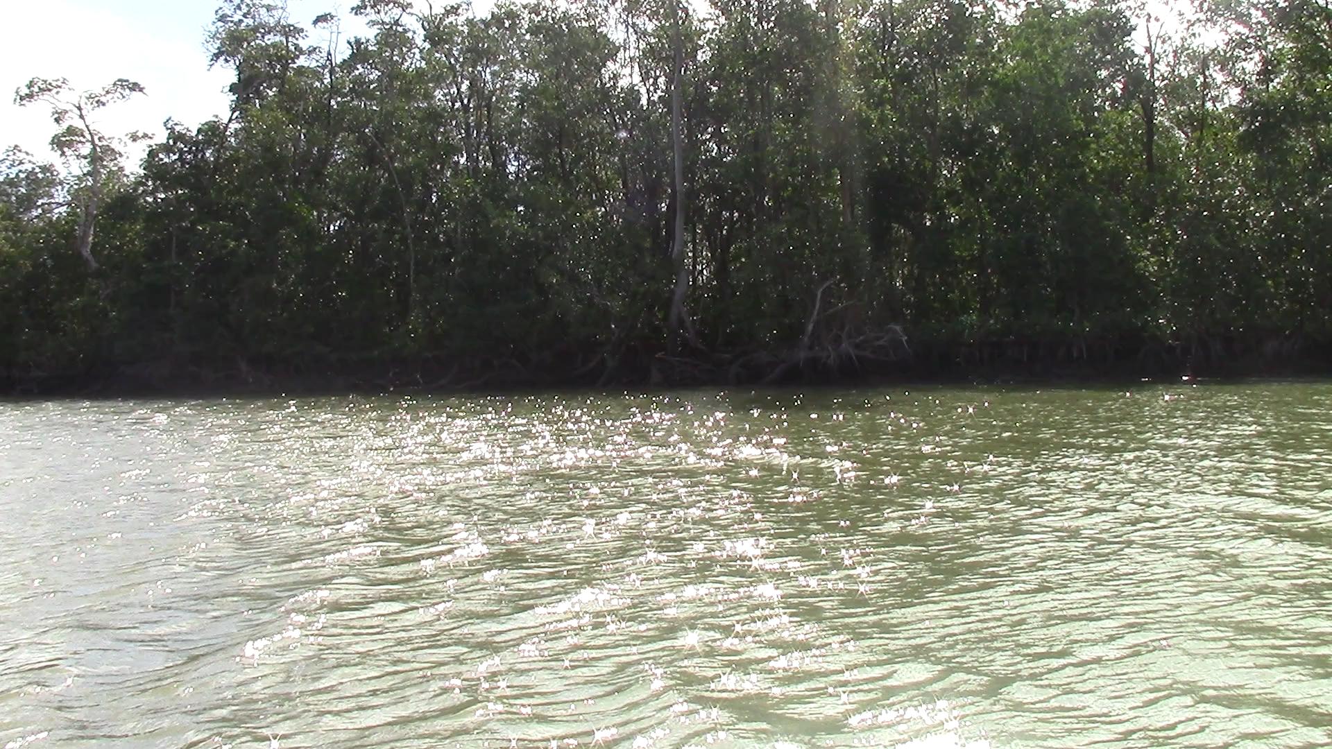 Mangroves for miles.