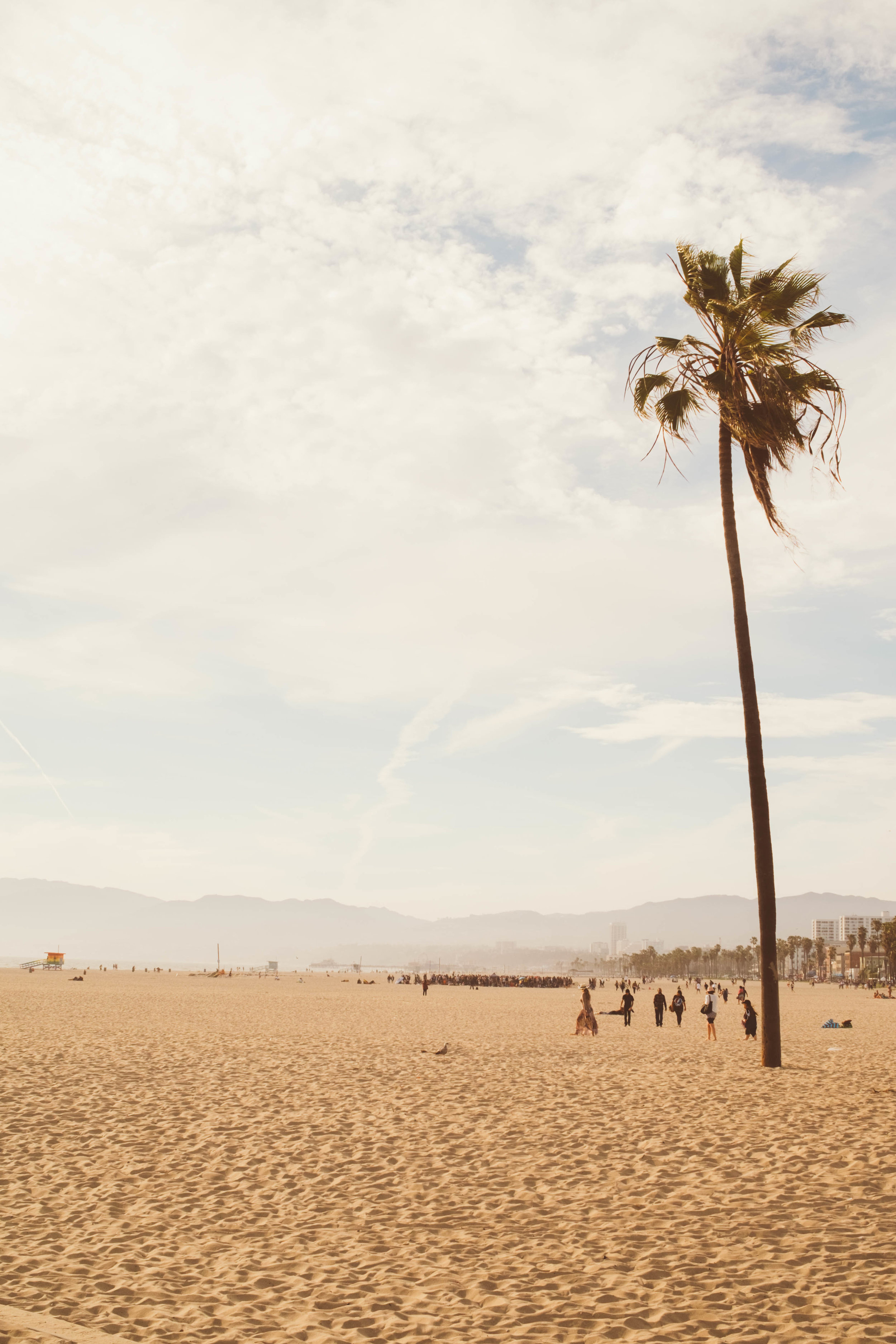 @nerdee_ - Los Angeles, CA