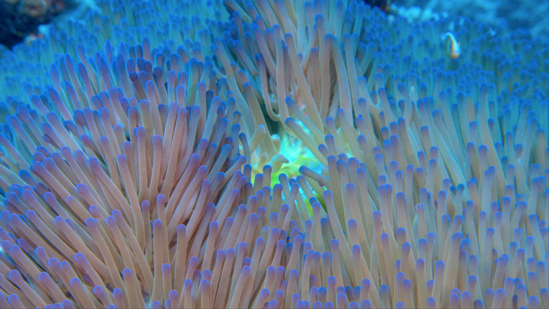 Photo 3 Screen-Shot-Coral.jpg
