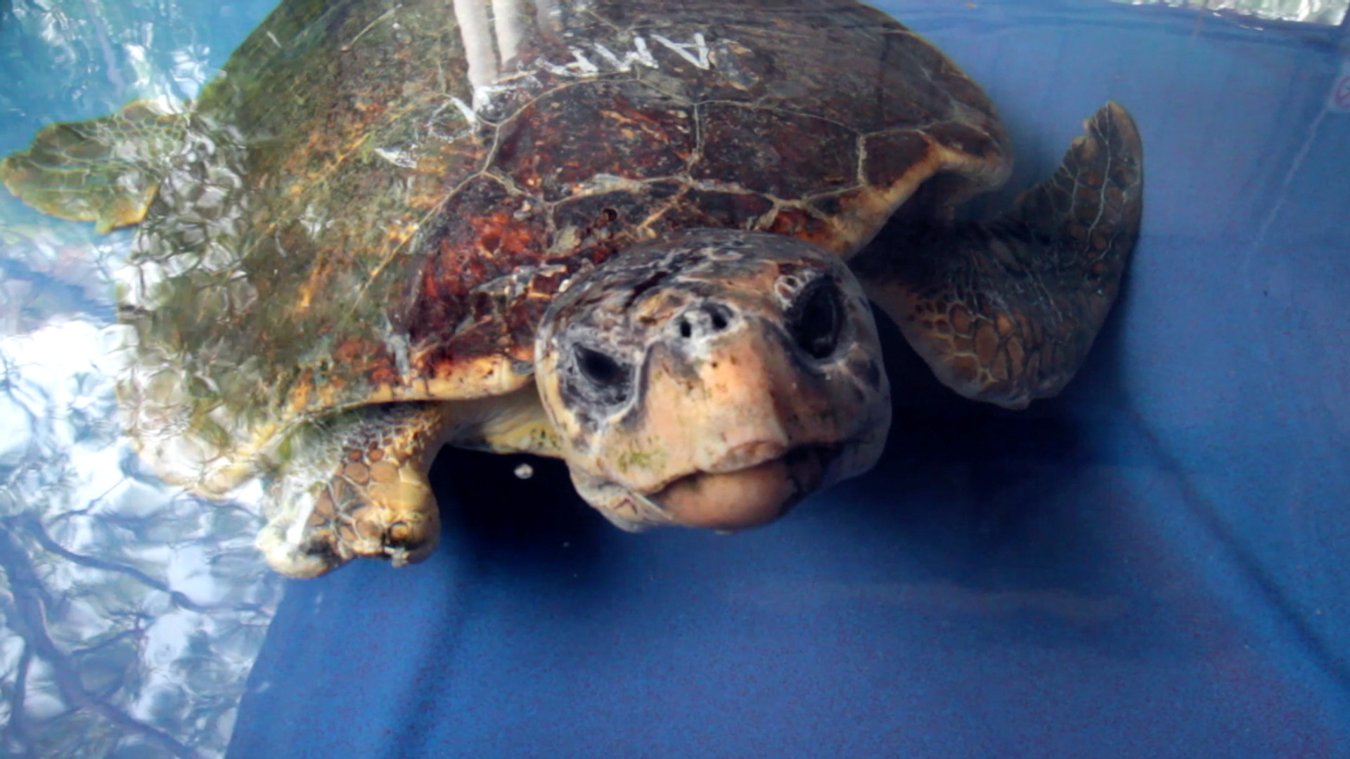 Photo 6 Screen-Shot-Rehabilitated_Turtle_3.jpg