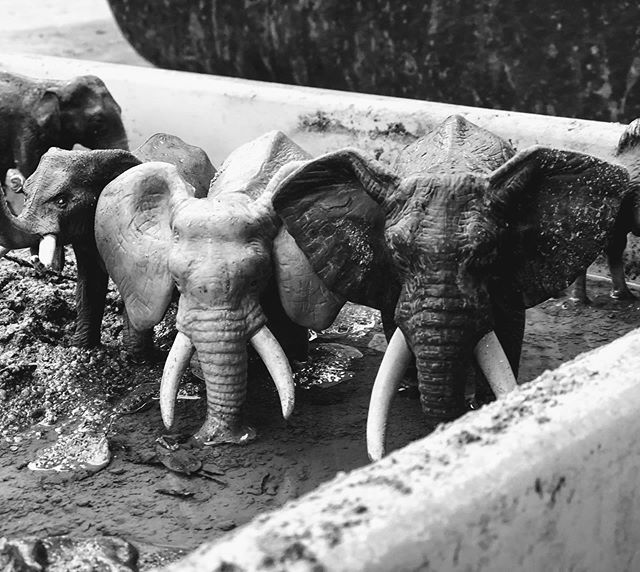 Elephants on the move in the mud! #elephants #play #playled #emergentcurriculum #cottagecoopschool