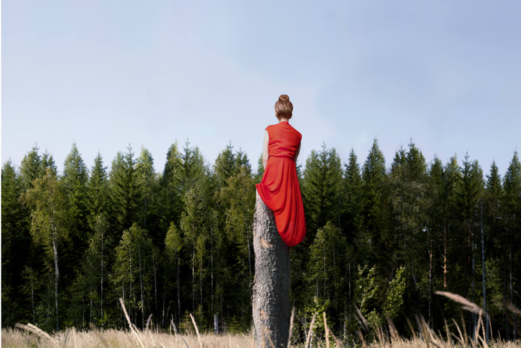 Artist:   Maia Flore  | Since today is all about navigating STRESS, let's focus on the GROUNDING aspect of our Root Center with some calming, GORGEOUSLY composed pictures of trees.