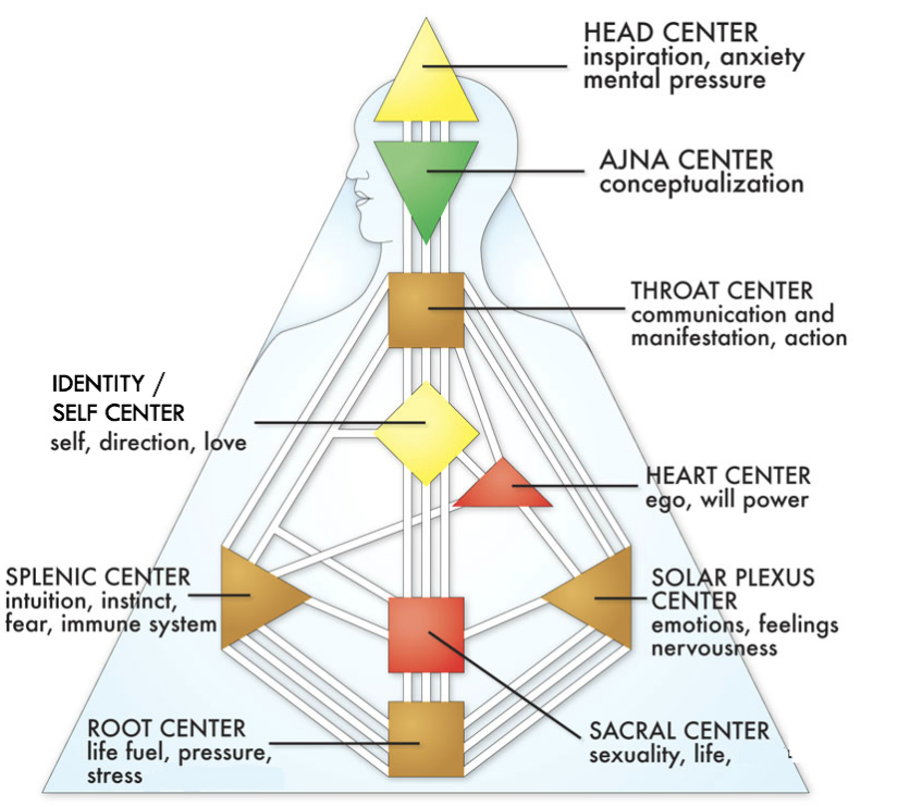 The Sacral Center is red the square directly above the Root Center. 66-70% of the population have this center defined.