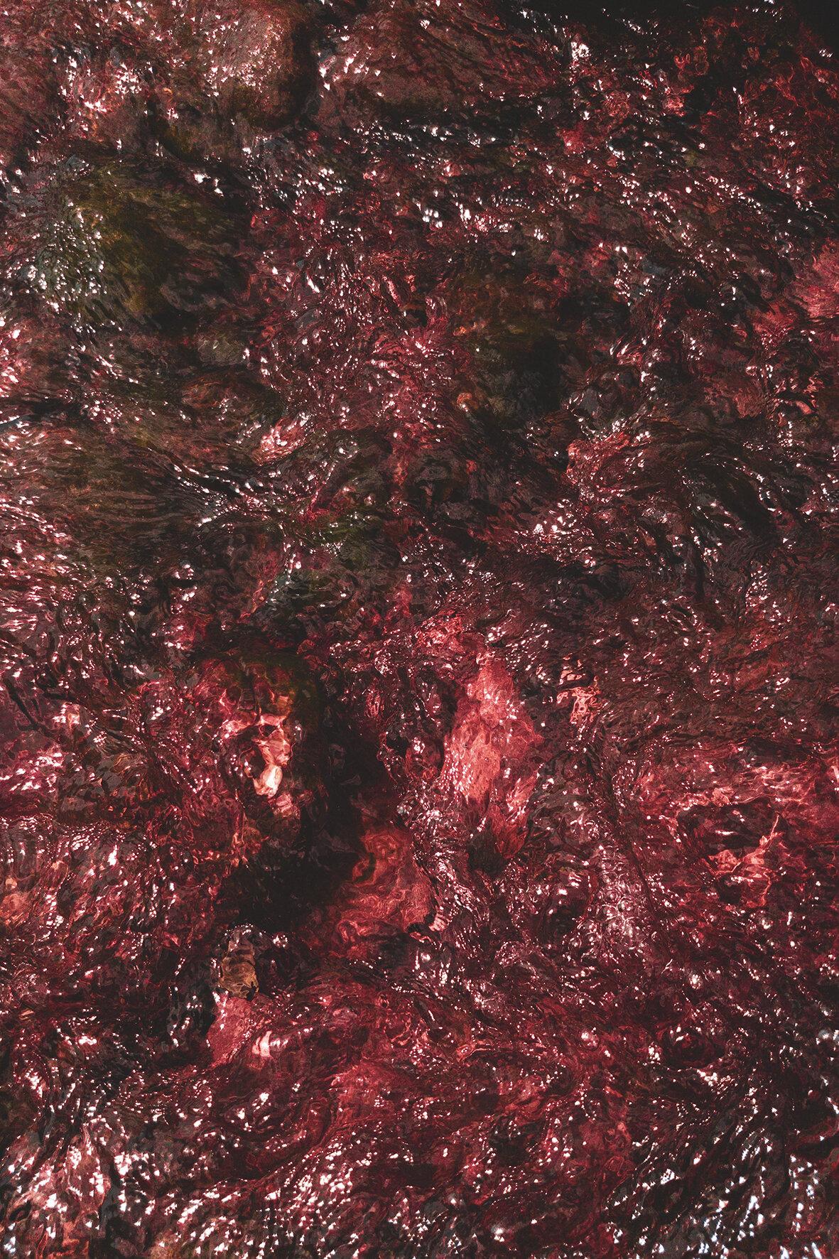 sangue 10x15.jpg