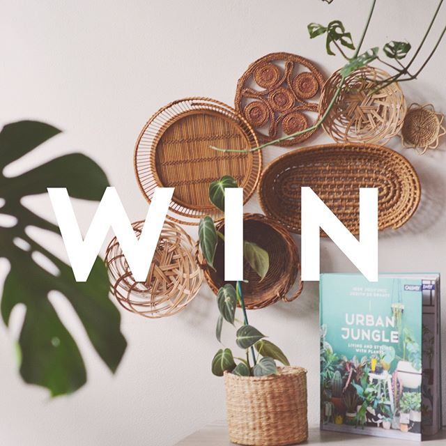 TAG TO WIN! ✨Softer's 5k 🌱Plant Lovers Home 🌱Giveaway!!!✨ 🔻🔻🔻see below for details 🔻🔻🔻 . . 〰️ As a heartfelt thank you for all of the love and support I've experienced here and in celebration of having reached 5k followers, I am holding a special giveaway to soften up your home ✨ . . 〰️ One lucky winner will receive:  1. A 4 inch pot sized Philodendron Melanochrysum  2. A copy of 'Urban Jungle' by Igor Josefobic and Judy De Graaff 3. 7 piece mini basket/trivet wall installation (including a basket perfect for housing an air plant!) 4. Vintage minimalist woven wicker pot (perfect fit for your new plant! . . . 〰️ HOW TO ENTER: 1. Like this post 2. Follow @soft_er 3. TAG YOUR FRIENDS!!!! (One tag per post - the more people you tag, the more entries you'll get!!) . . . . . 〰️ BONUS ENTRIES 〰️ . 1. Share this post on your Instagram page and tag @soft_er for 10 extra entries (public accounts only) 2. Share this post on you Instagram story and tag @soft_er for 5 extra entries (public accounts only)  3. Sign up for the Softer Newsletters- link in @soft_er bio for 10 extra entries  Giveaway runs from Monday, May 14th - Friday, May 18th at 11:59pm PST. Winner will be announced in our story Saturday, May 19th and we will reach out to the winner directly to collect shipping information.  Winner will be chosen at random. Open to US and Canada only. This giveaway is not sponsored or affiliated with Instagram. 〰️ Happy Tagging 〰️ • • • • • • •  #plants #houseplants #houseplantjournal #plantas #houseplantsofinstagram #plantparenthood #greenthumb #plantphotography #urbanjunglebloggers #urbanjungle #jungalow #monsteradeliciosa #philodendronmelanochrysum #houseplantclub #plantsmakepeoplehappy #plantscout #pottery #aroids #jungalowstyle #bohostyle #plantparenthood #monsteramonday #vintagedecor #plantsofinstagram #plantladyco #bohemian #interiordesign #plantlover #apartmenttherapy #decoratewild