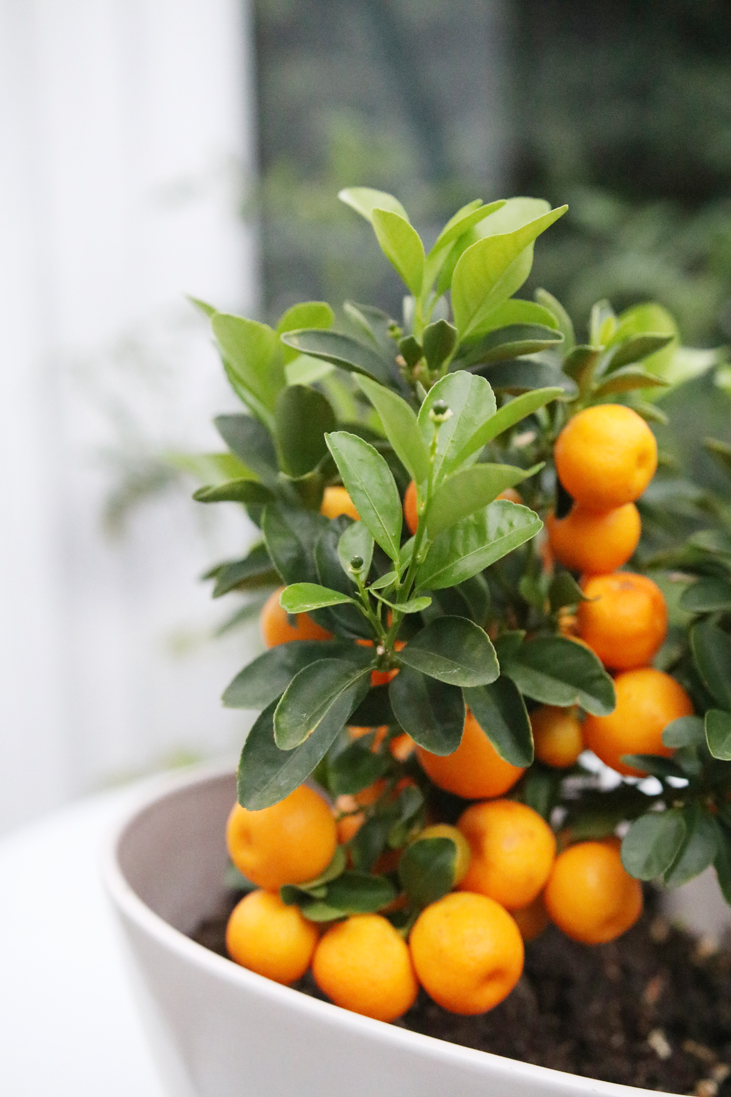 Bra Mitt växthus — SOFIAMILK TZ-81