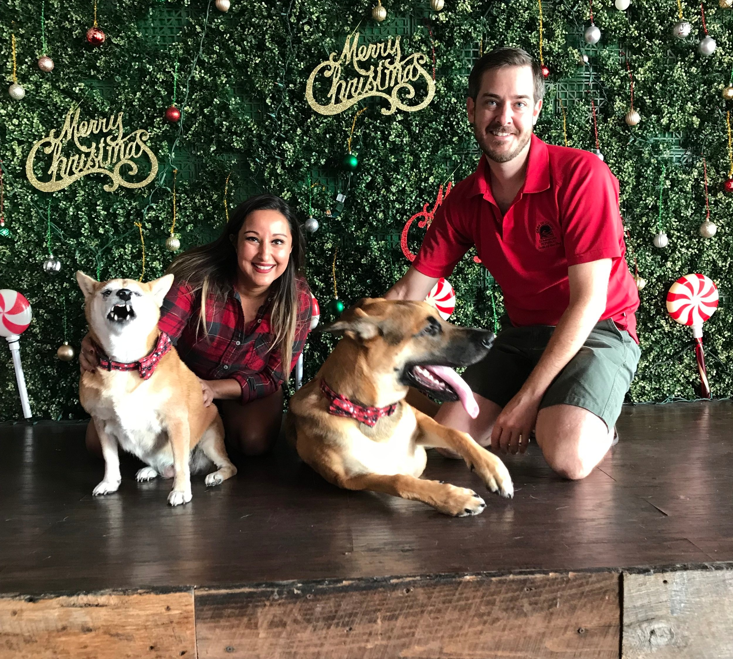 Forty takes for our annual Christmas card.   And this was the second best picture.  Bear Bear looks like a feral little gremlin and Bones is about to scare the hell out of a little old lady.