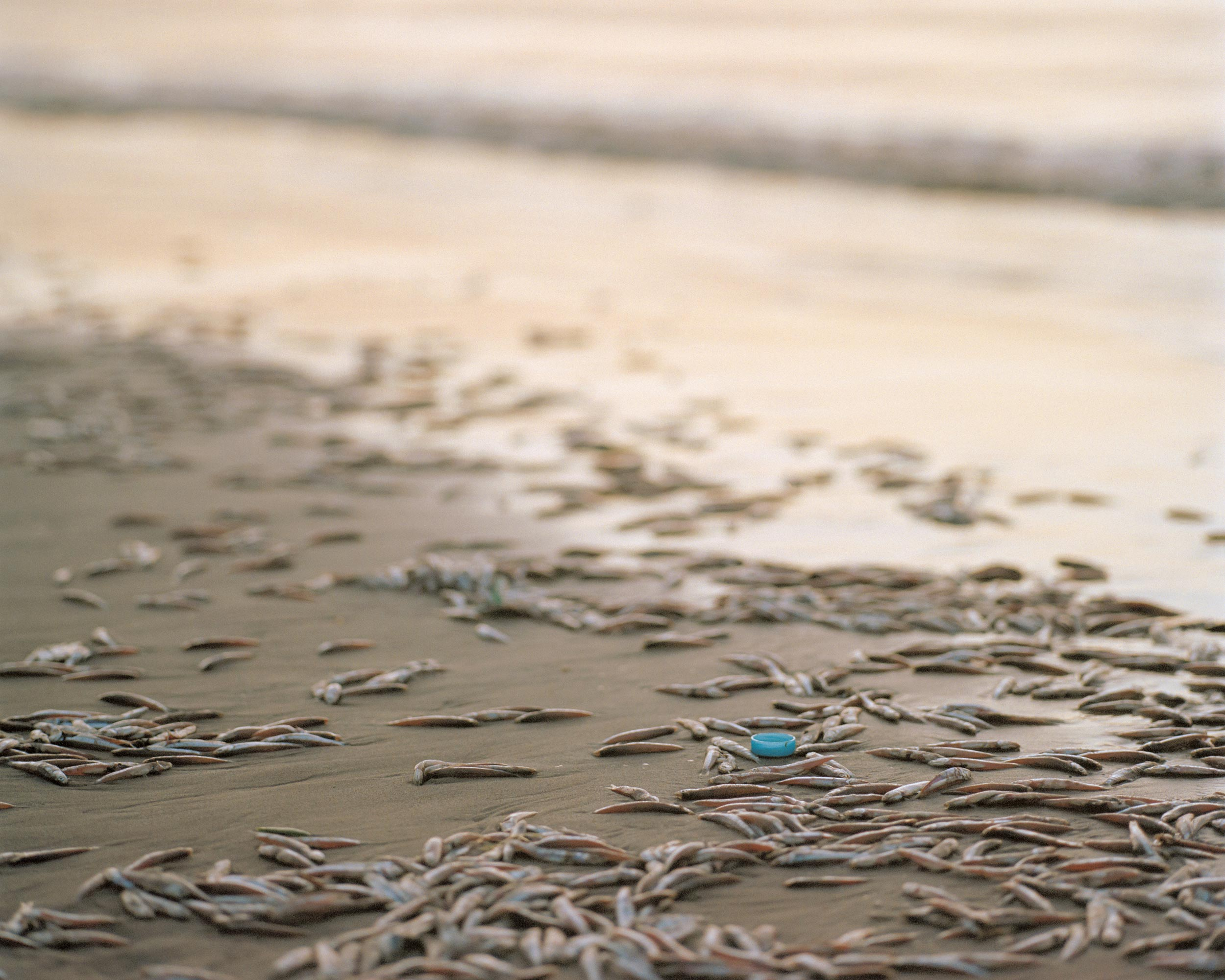 photograph of fish on beach from series XO