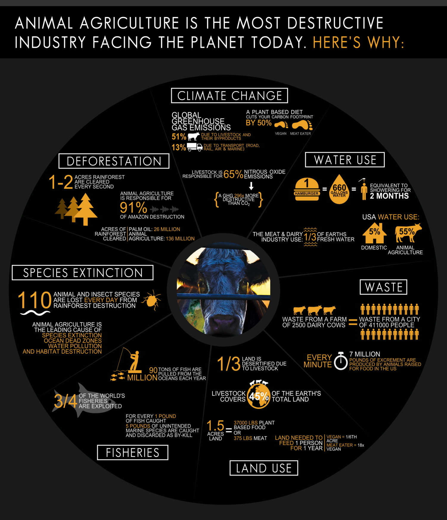 Image source: http://www.cowspiracy.com/infographic