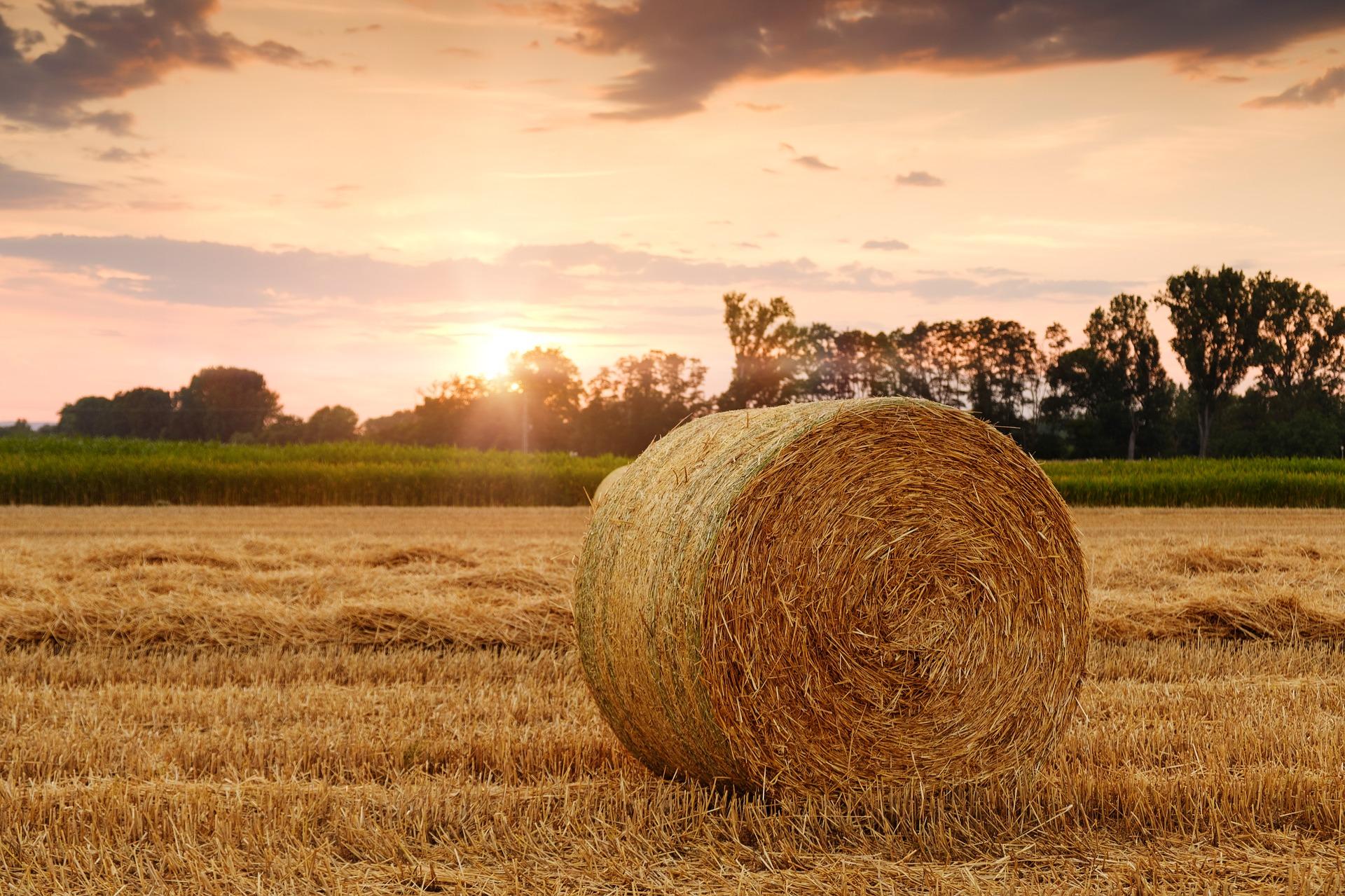 straw-bales-3521063_1920.jpg