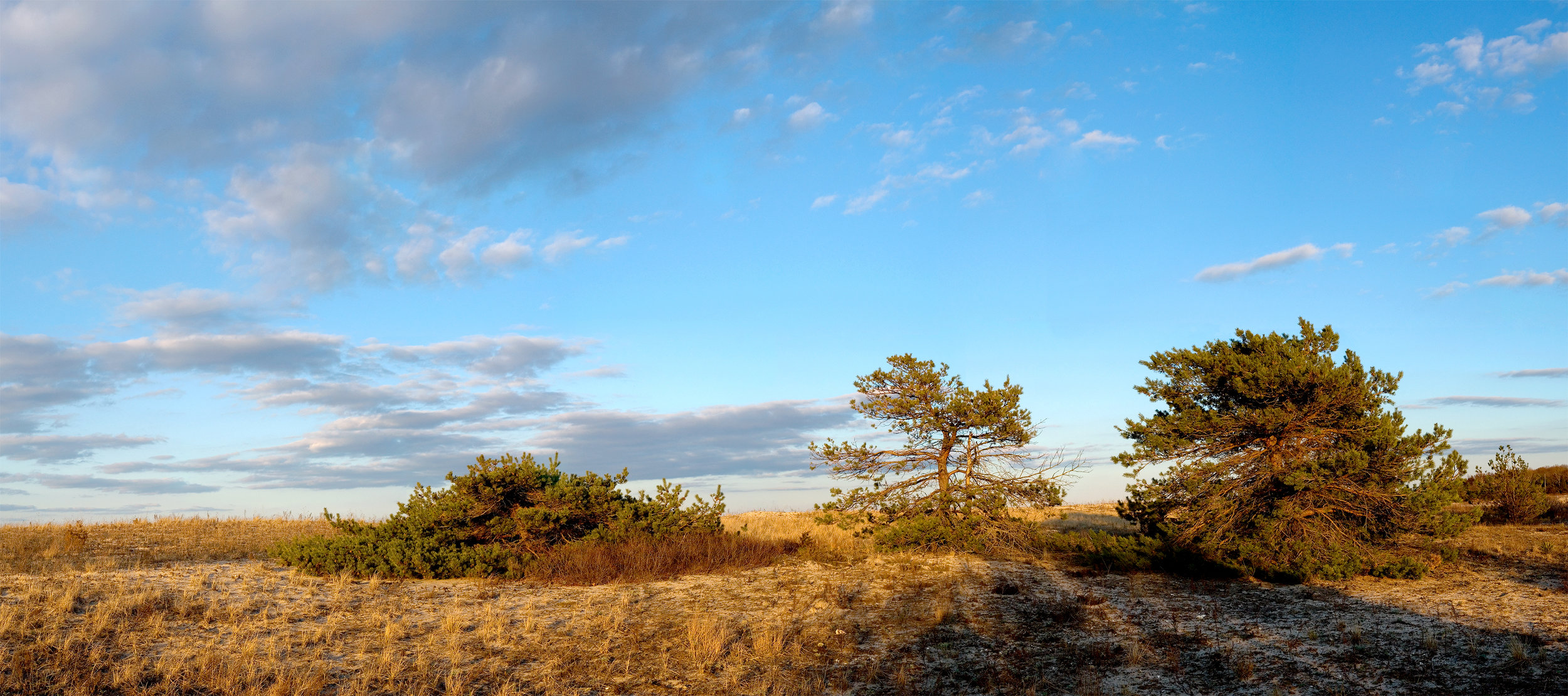 THREE PINES AT LOUSE POINT