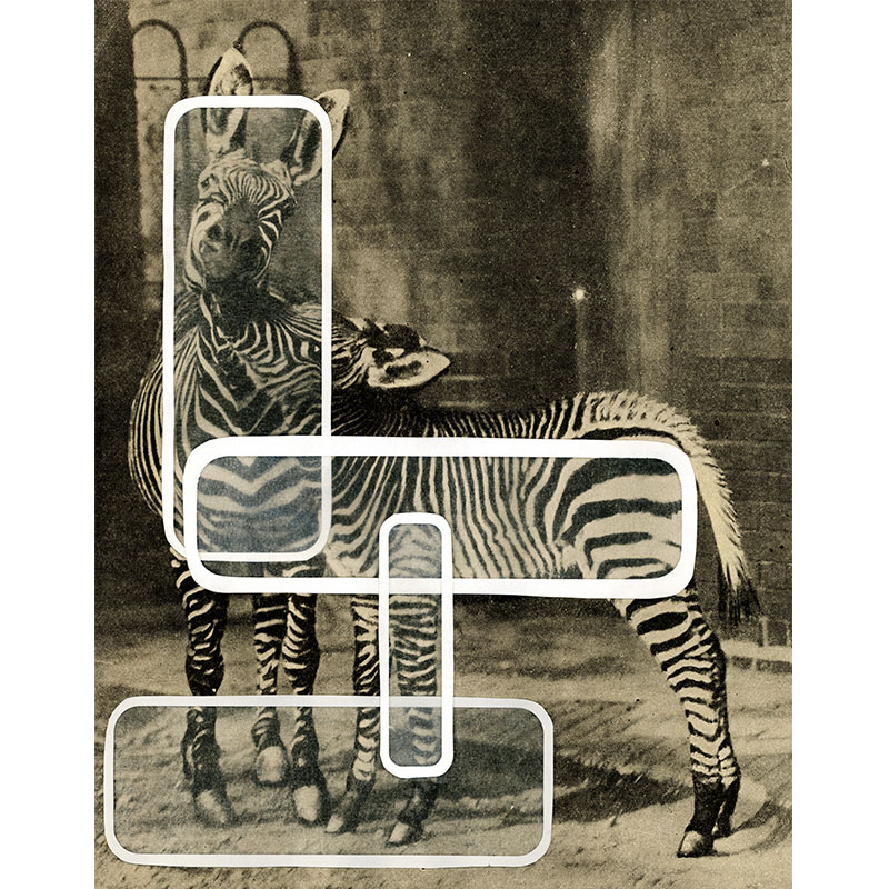 "Overlay Series: Zebra , 2005 digital print 31.5 x 24"" paper Edition of 3, TP  Inquire >"