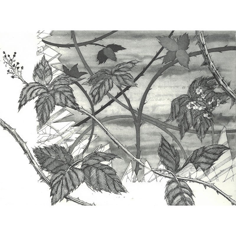 """Thorns , 2010 etching 8.75 x 11.75"""" image 14 x 16"""" paper Edition of 10  Inquire >"""